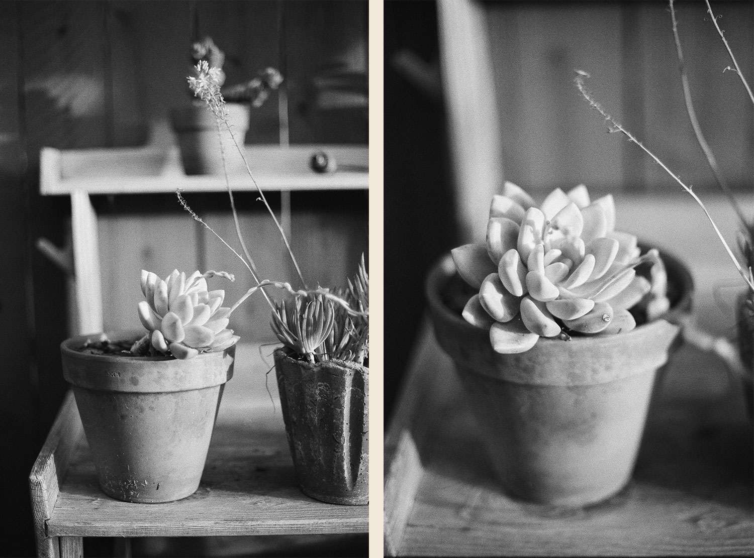 Example photos using Kodak T-Max P3200 film